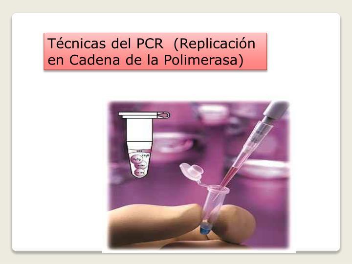 Técnicas del PCR  (Replicación en Cadena de la Polimerasa)