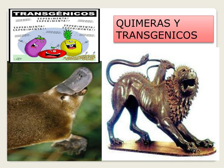 QUIMERAS Y TRANSGENICOS