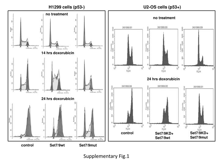 H1299 cells (p53-)