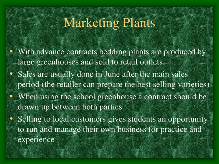 Marketing Plants