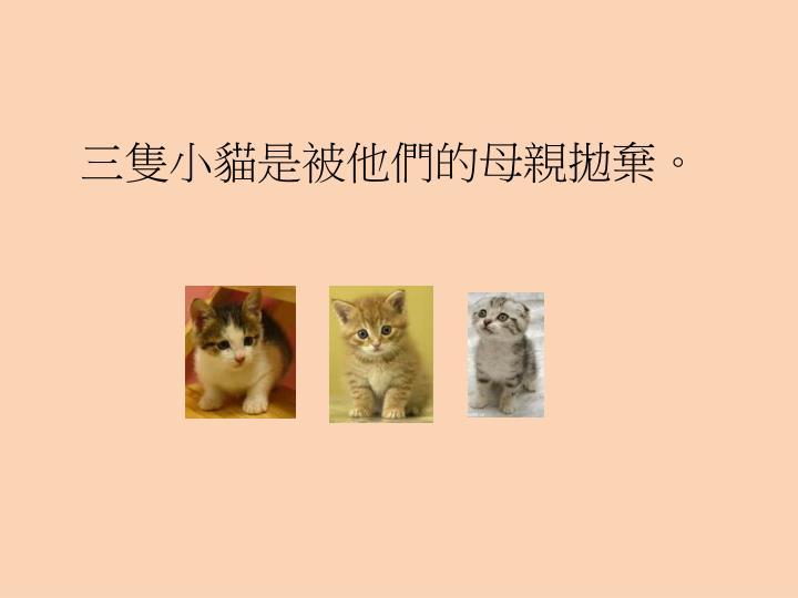 三隻小貓是被他們的母親拋棄。