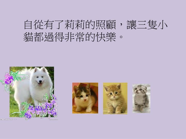 自從有了莉莉的照顧,讓三隻小貓都過得非常的快樂。