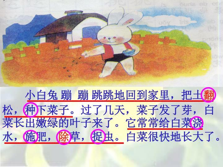 小白兔 蹦  蹦 跳跳地回到家里,把土