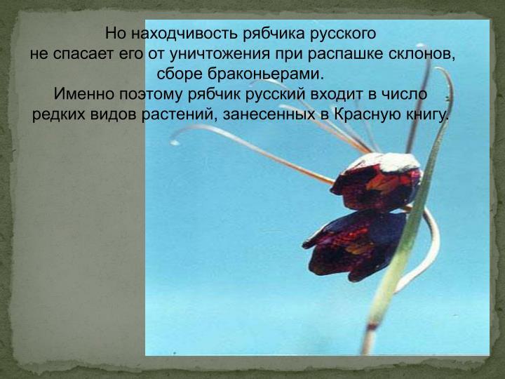 Но находчивость рябчика русского