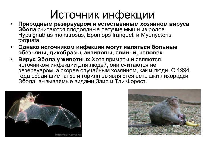 Источник инфекции