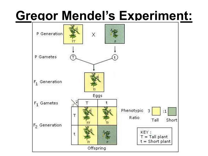 Gregor Mendel's Experiment: