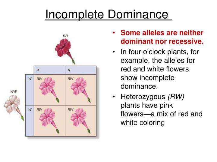 Some alleles are neither dominant nor recessive.