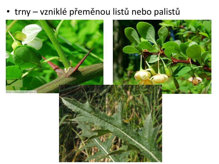 trny – vzniklé přeměnou listů nebo palistů