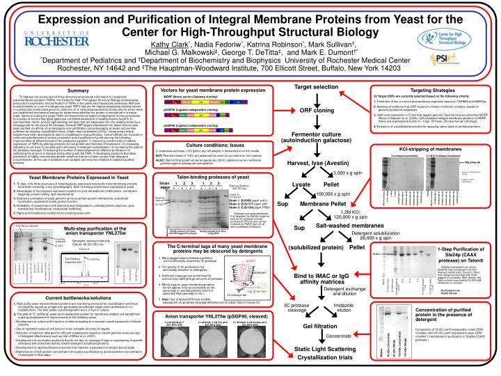 Expression and purification of integral membrane proteins from yeast for the