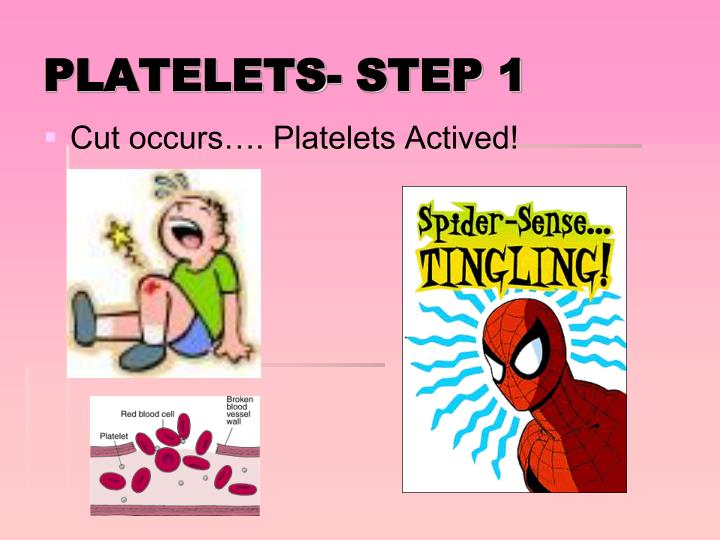 Cut occurs…. Platelets Actived!