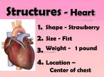 structures heart