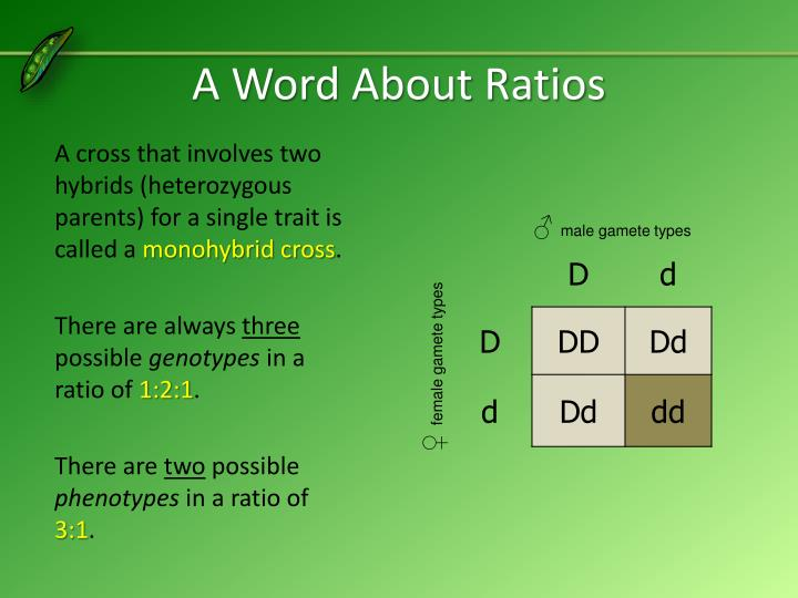 A Word About Ratios