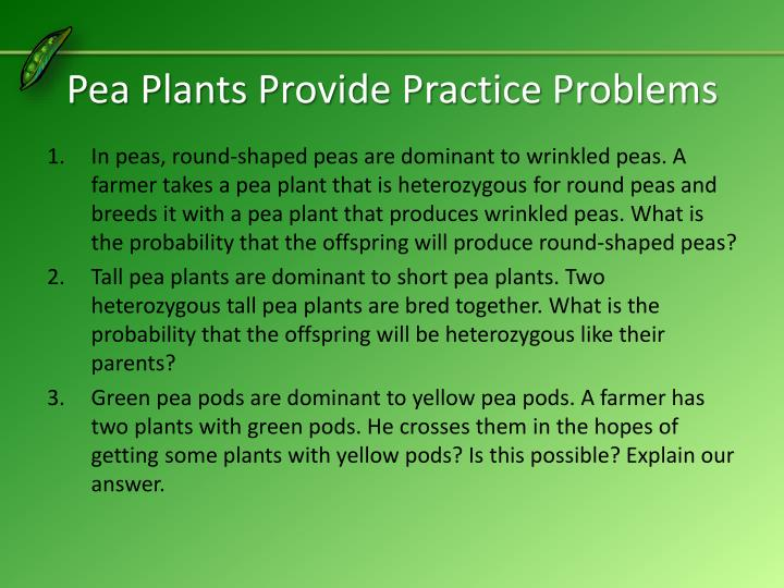 Pea Plants Provide Practice Problems