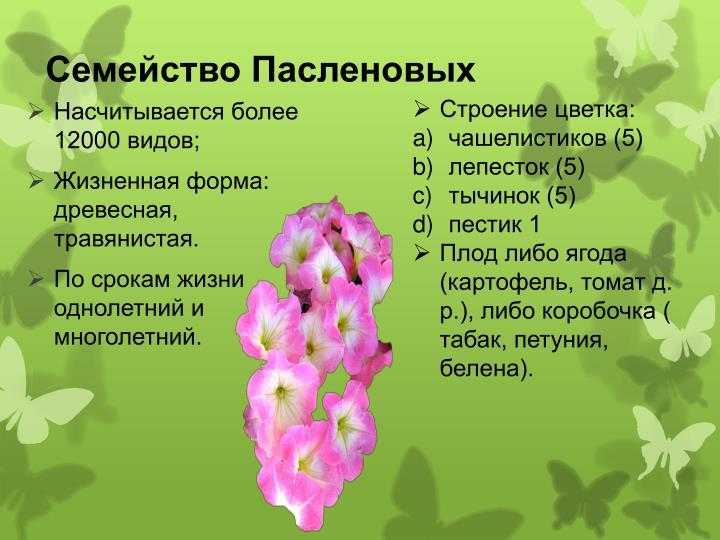 Семейство Пасленовых