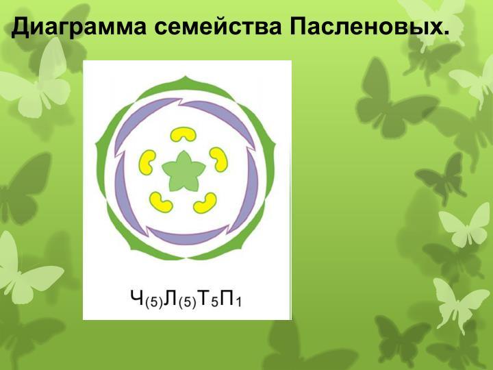 Диаграмма семейства Пасленовых