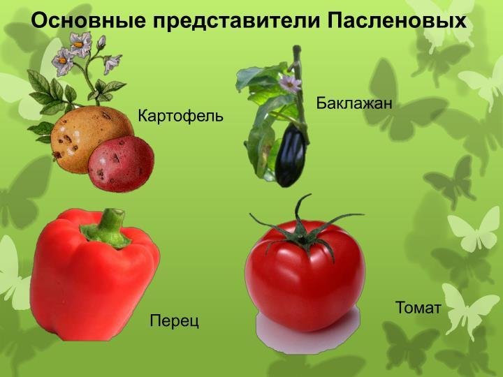 Основные представители Пасленовых