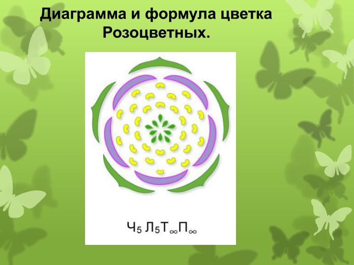 Диаграмма и формула цветка Розоцветных.