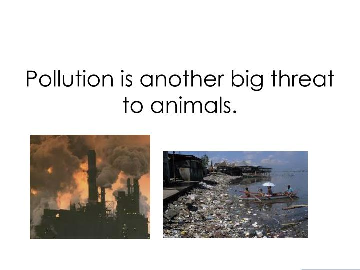 Pollution is another big threat to animals.