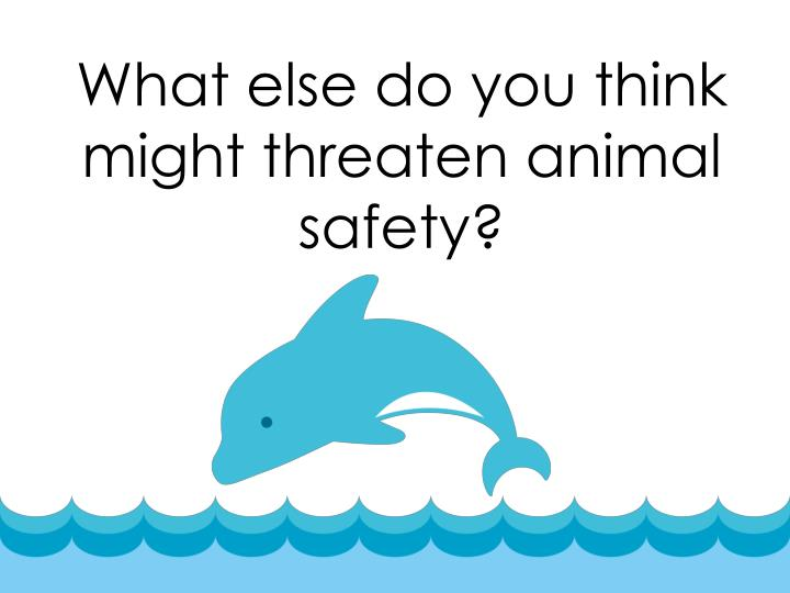 What else do you think might threaten animal safety?