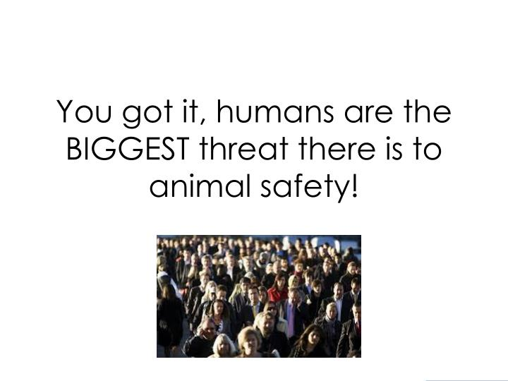 You got it, humans are the BIGGEST threat there is to animal safety!