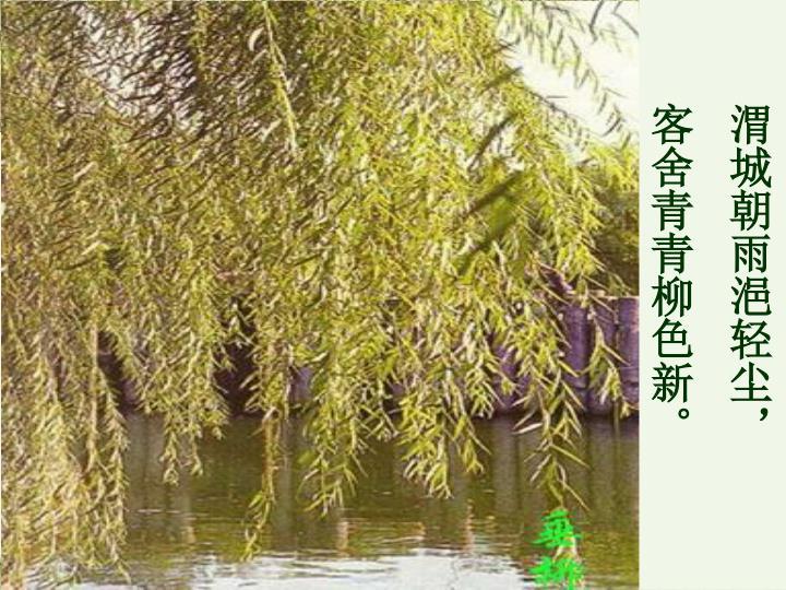 渭城朝雨浥轻尘,