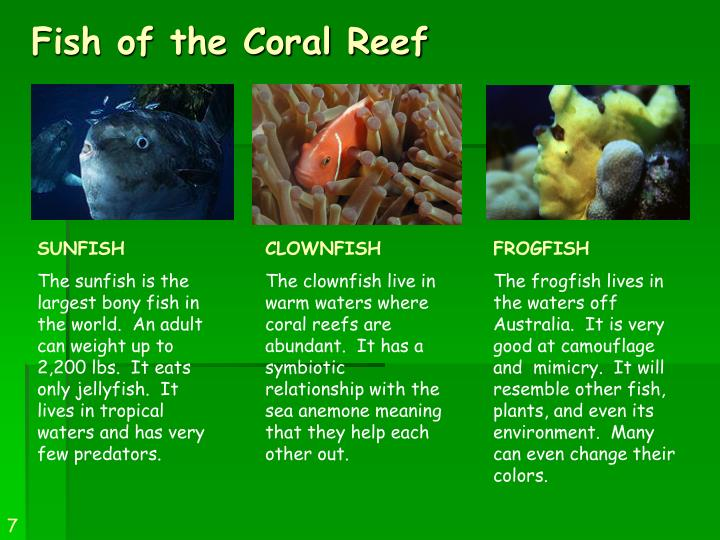 Fish of the Coral Reef