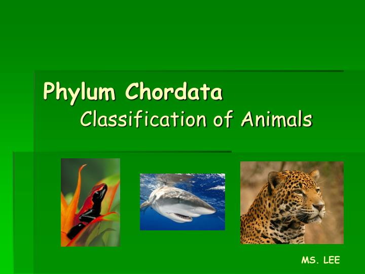 phylum chordata classification of animals