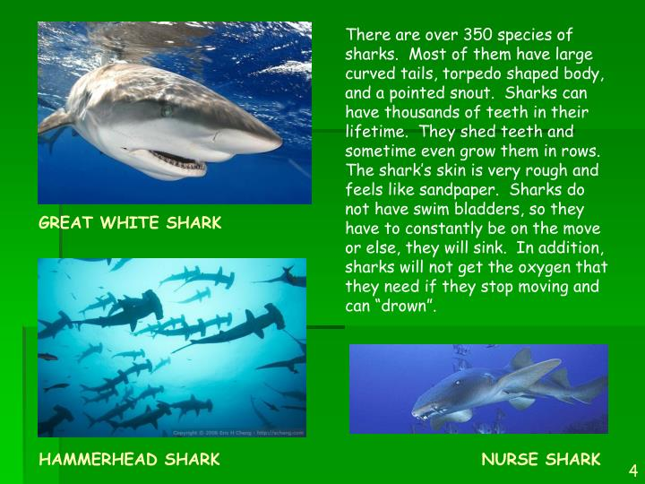 """There are over 350 species of sharks.  Most of them have large curved tails, torpedo shaped body, and a pointed snout.  Sharks can have thousands of teeth in their lifetime.  They shed teeth and sometime even grow them in rows.  The shark's skin is very rough and feels like sandpaper.  Sharks do not have swim bladders, so they have to constantly be on the move or else, they will sink.  In addition, sharks will not get the oxygen that they need if they stop moving and can """"drown""""."""
