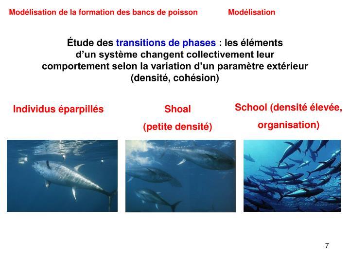 Modélisation de la formation des bancs de poisson