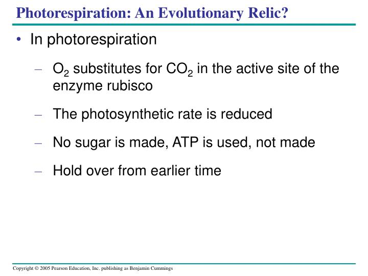 Photorespiration: An Evolutionary Relic?