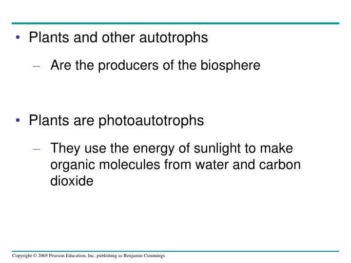 Plants and other autotrophs