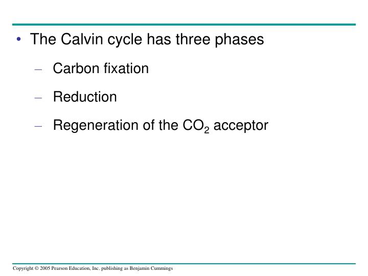 The Calvin cycle has three phases