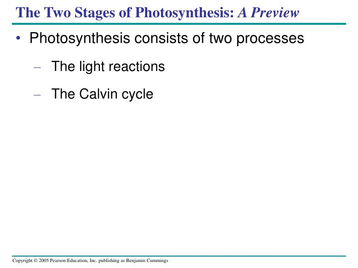 The Two Stages of Photosynthesis: