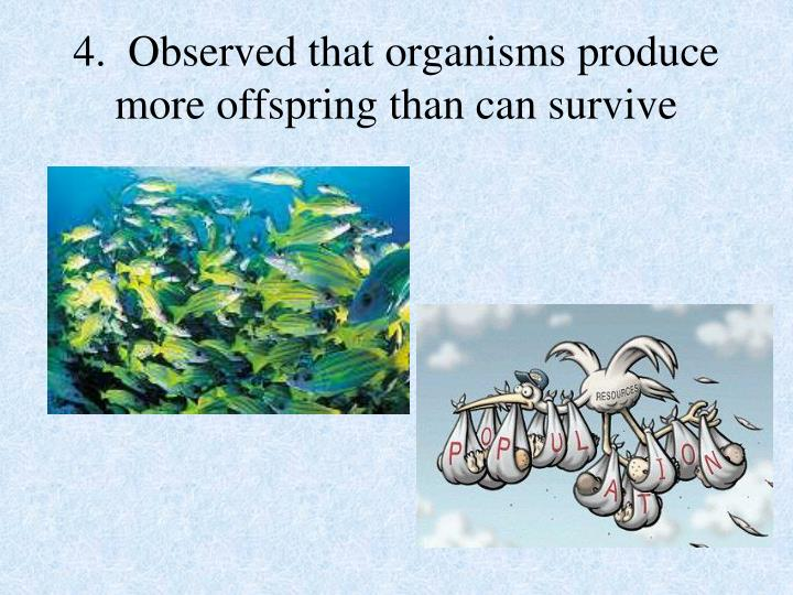4.  Observed that organisms produce more offspring than can survive