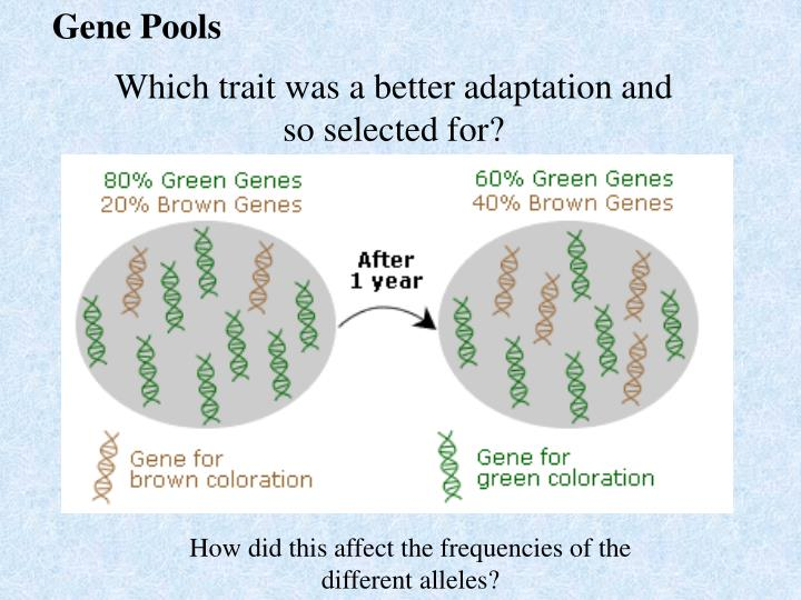 Gene Pools