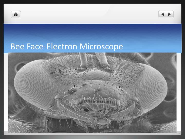 Bee Face-Electron Microscope