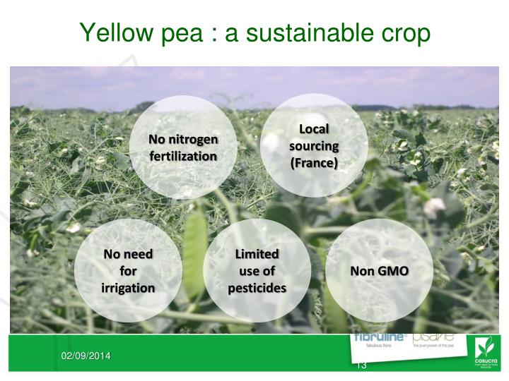 Yellow pea : a sustainable crop