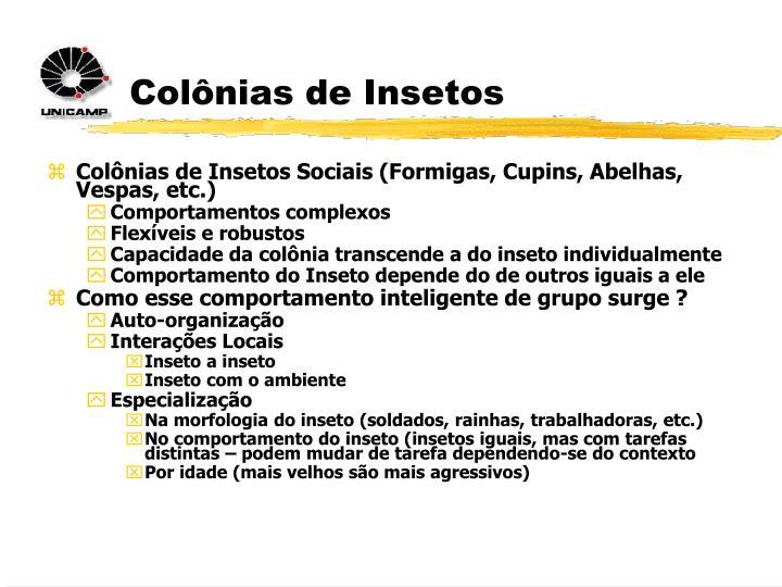 Colônias de Insetos