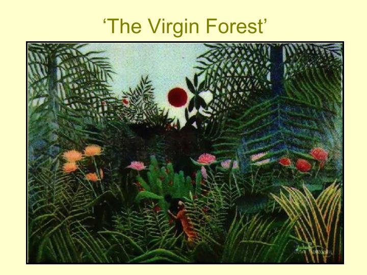 'The Virgin Forest'