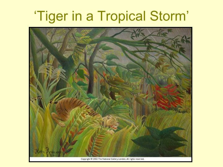 'Tiger in a Tropical Storm'