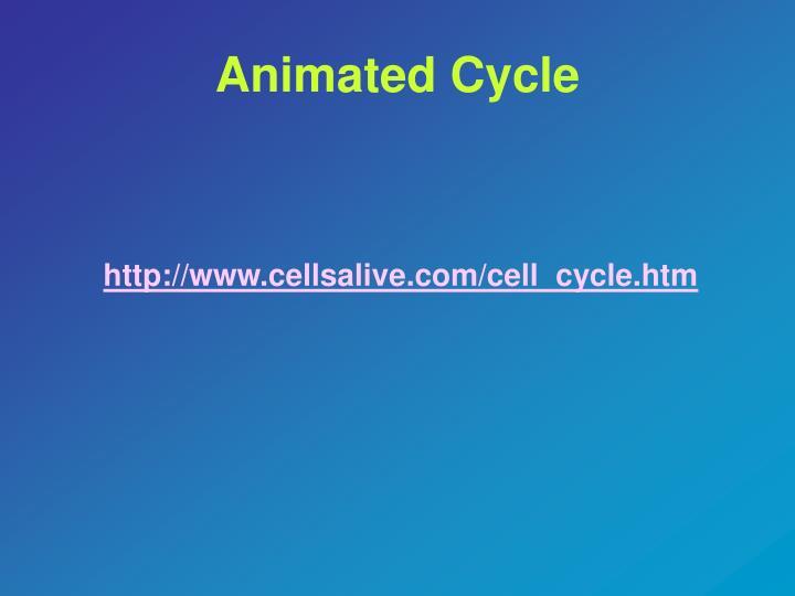 Animated Cycle