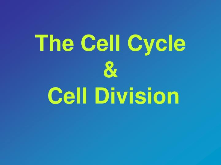 The cell cycle cell division