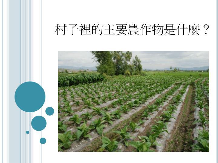 村子裡的主要農作物是什麼?