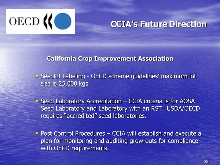 CCIA's Future