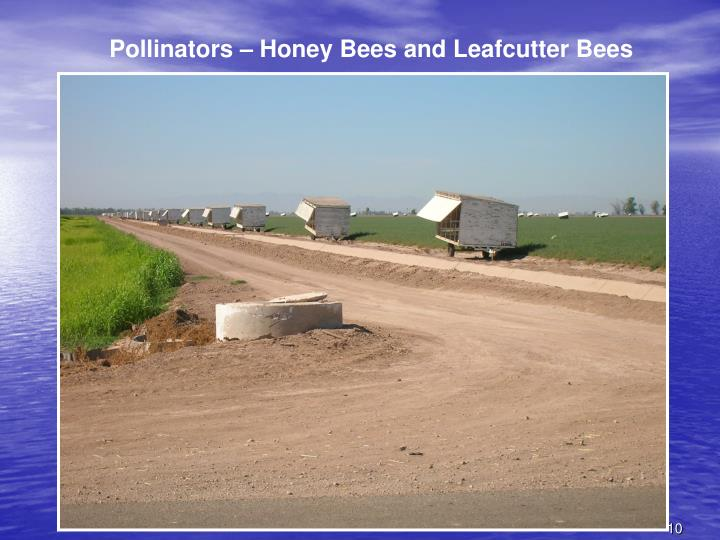 Pollinators – Honey Bees and Leafcutter Bees
