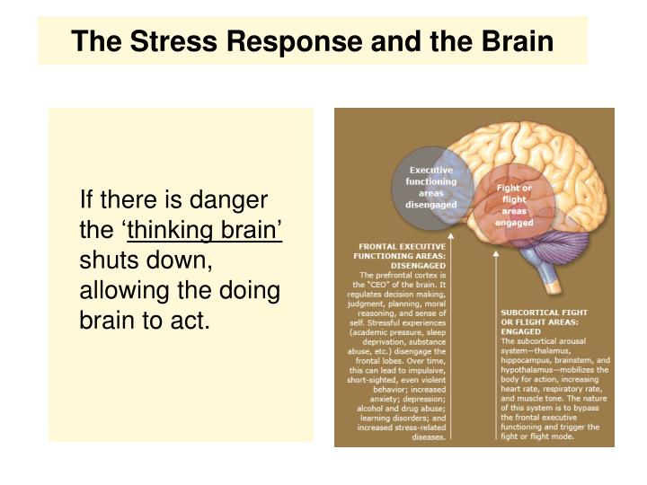 The Stress Response and the Brain