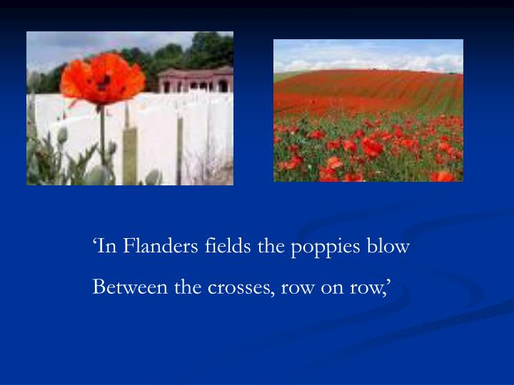'In Flanders fields the poppies blow