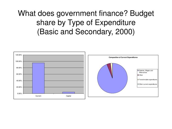 What does government finance? Budget share by Type of Expenditure