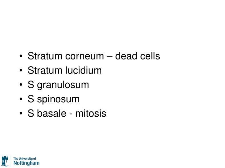 Stratum corneum – dead cells
