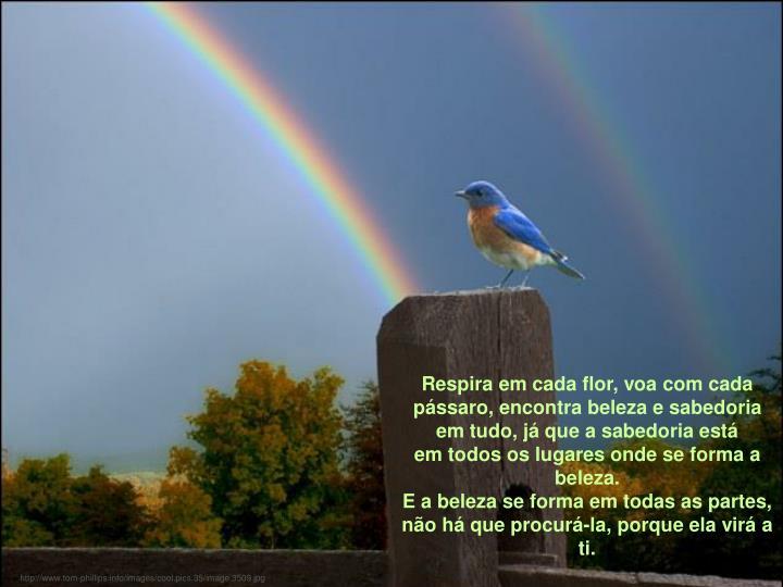 Respira em cada flor, voa com cada pássaro, encontra beleza e sabedoria em tudo, já que a sabedoria está